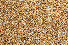 Fresh Close up Buckwheat background , texture. view from top. Royalty Free Stock Images