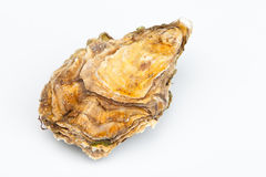 The fresh closed oyster. On a white background Stock Photography