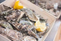 Fresh closed oysters with lemons in the street market stock images
