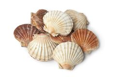 Fresh closed scallops. On white background Stock Photography