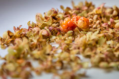 Fresh cloudberries Stock Images