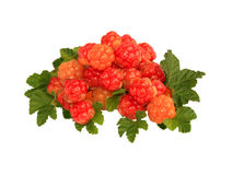 Fresh cloudberry Royalty Free Stock Photography