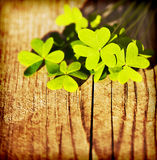 Fresh clover leaves over wooden background Stock Photo