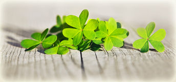 Fresh clover leaves over wooden background. Green spring floral border, lucky shamrock, St.Patrick's day holiday symbol stock image