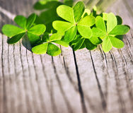 Fresh clover leaves over wooden background. Green spring floral border, lucky shamrock, St.Patrick's day holiday symbol royalty free stock photo