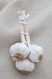 Fresh cloves of garlic Stock Image
