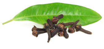 Fresh cloves with green clove leaf Stock Image