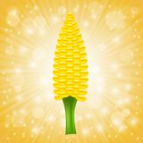 Fresh Cob Corn Royalty Free Stock Image
