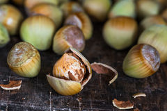 Fresh cobnuts Royalty Free Stock Photo