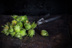 Fresh cobnuts Stock Images