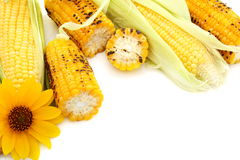 Fresh cobs with green leaves and grilled corn. Stock Images