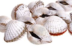 Fresh Cockles Stock Photography