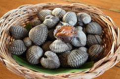 Fresh cockles casually placed on a wicker basket Royalty Free Stock Photo