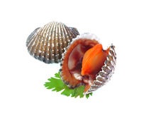 Fresh cockles isolated on white background Stock Photography