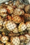 Fresh cockles mesh in a market stall. In Lisbon, Portugal Stock Images