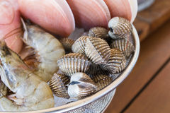 Fresh cockles and other fresh seafood. On the ice Stock Image