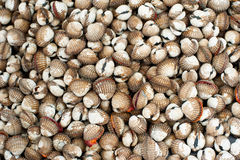Fresh cockles for sale at asian seafood market Stock Photography