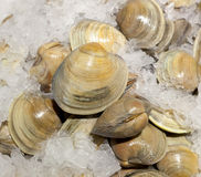 Fresh cockles for sale Royalty Free Stock Images