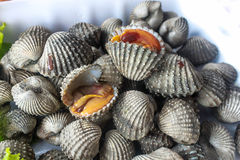 Fresh cockles for sale Royalty Free Stock Photo