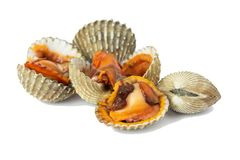 Fresh cockles seafood royalty free stock photography