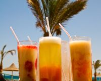 Fresh cocktails opposite big palm. Stock Photo
