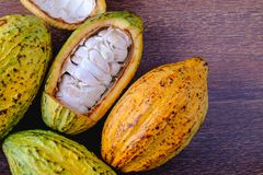 Fresh cocoa and cocoa pod with raw cacao. On a wooden table stock images