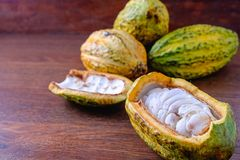 Fresh cocoa and cocoa pod with raw cacao. On a wooden table royalty free stock photo