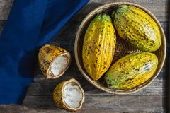 Fresh cocoa fruit. in basket royalty free stock image