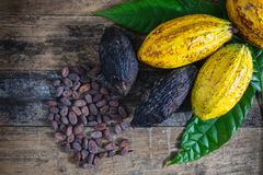 .Fresh cocoa.fruit and cocoa beans On a wooden background royalty free stock photo