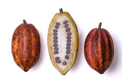 Fresh cocoa fruits with beans. Three fresh cocoa fruits on white background, one fruit is open and one can see the cocoa beans stock photo