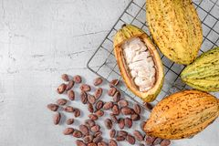 Fresh cocoa with cocoa pods and cocoa beans stock photo