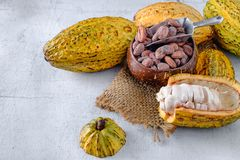 Fresh cocoa with cocoa pods and cocoa beans stock images