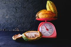 Fresh cocoa and cocoa pods stock photography