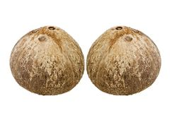 Fresh coconut Stock Images