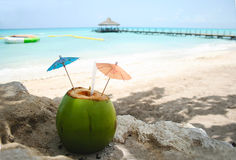 Fresh Coconut Cocktail Drink on a Caribbean Beach Royalty Free Stock Images