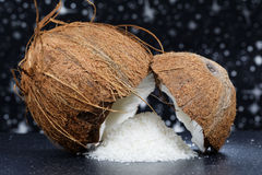 Fresh coconut and coconut desiccated Stock Photography