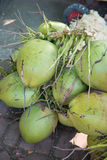 Fresh coconut from coconut tree Royalty Free Stock Images
