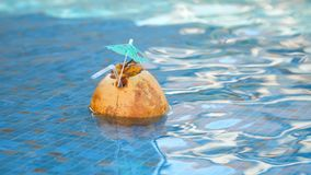Fresh Coconut juice cocktail with drinking straw floating in a refreshing blue swimming pool.  stock footage