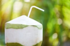 Fresh coconut juice drinking Young coconut fruit on summer nature green background stock image