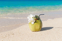 Fresh coconut juice with straw and Plumeria flowers on the tropi Stock Image