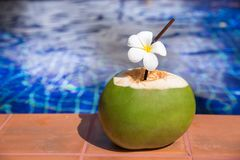 Fresh coconut juice with straw and plumeria, frangipani flower o Royalty Free Stock Images