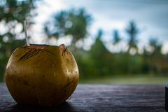 Fresh coconut open in table with straw stock photos