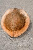 Fresh coconut Stock Image