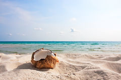 Fresh coconut on sand beach Royalty Free Stock Image