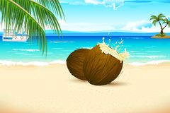 Fresh Coconut on Sea beach Royalty Free Stock Photography