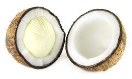 Fresh Coconut sprout Stock Photo