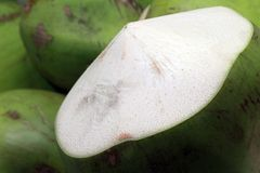 Fresh coconut from a tree Royalty Free Stock Photo