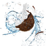 Fresh coconut with water splash. Over white background royalty free stock image