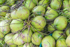 Fresh coconuts for background Royalty Free Stock Image