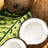 Fresh coconuts. Close up of fresh coconuts Stock Images